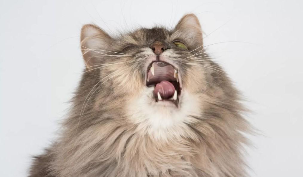 Почему кошки чихают