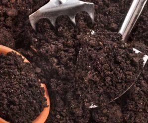 Способы продезинфицировать землю для рассады