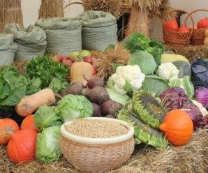 Простые и необычные способы увеличить урожай на своём участке
