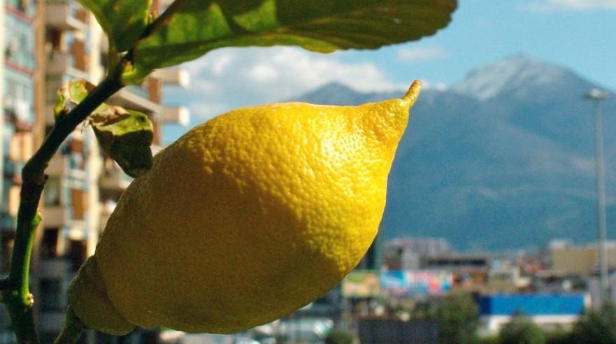 Созревший лимон