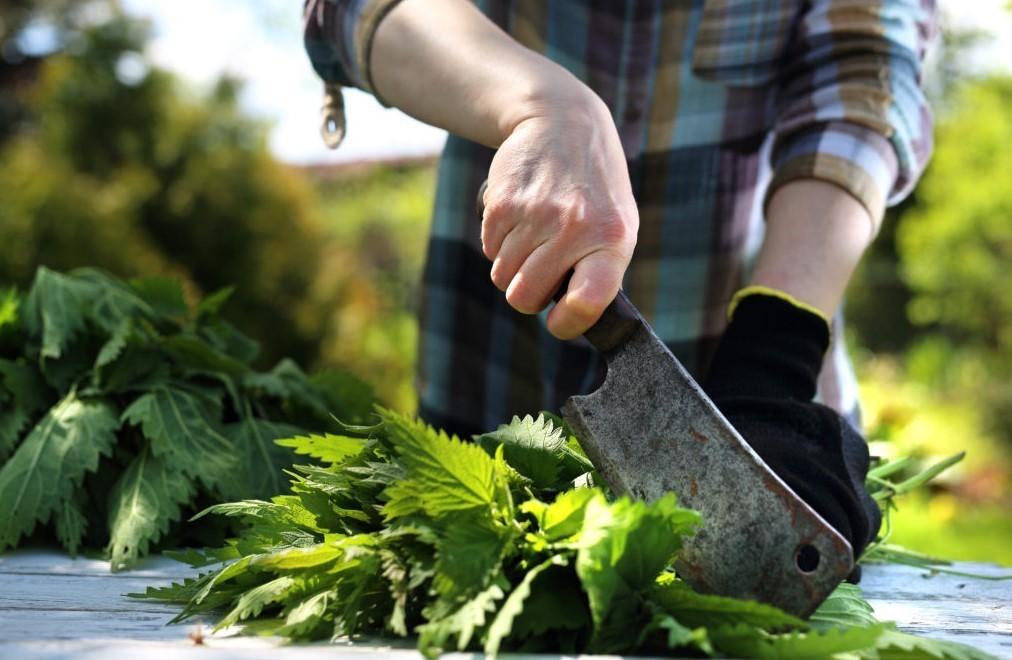 Удобрения из крапивы
