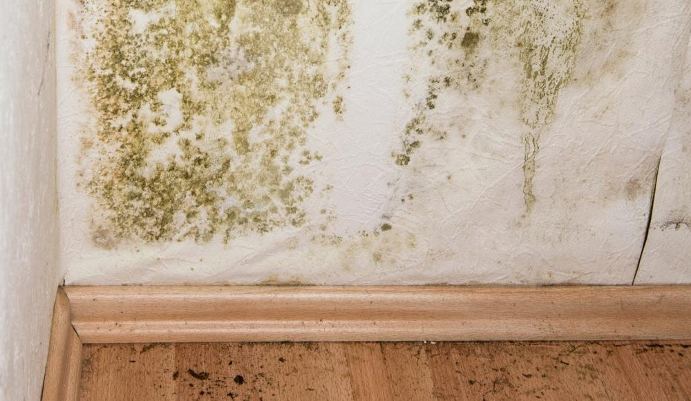 Пораженная стена зеленной гнилью