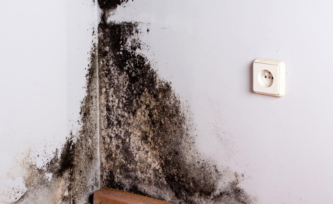 Пораженная стена черной гнилью