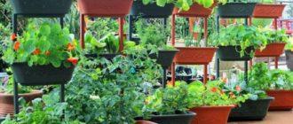 Растения в больших горшках на улице