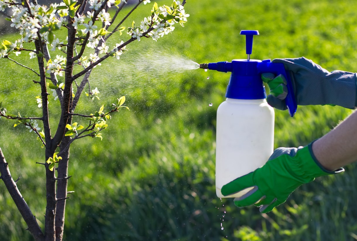 Опрыскивание садовых деревьев хелатным удобрениям