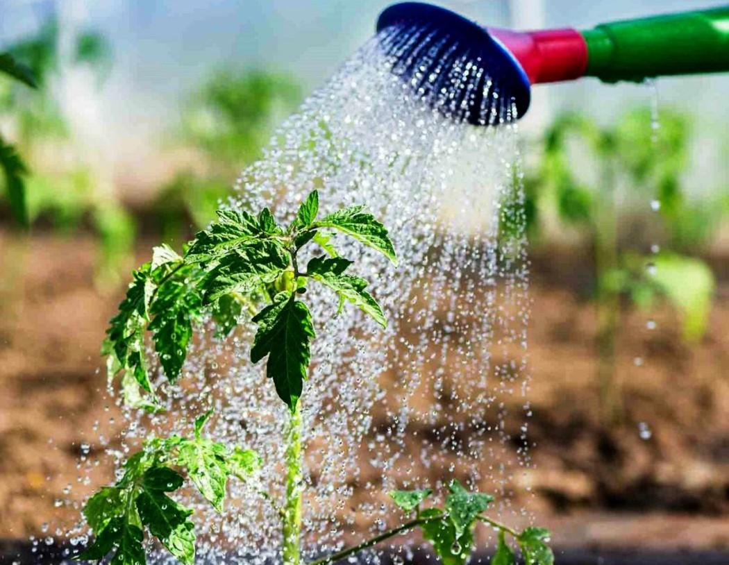 Полив огородных растений