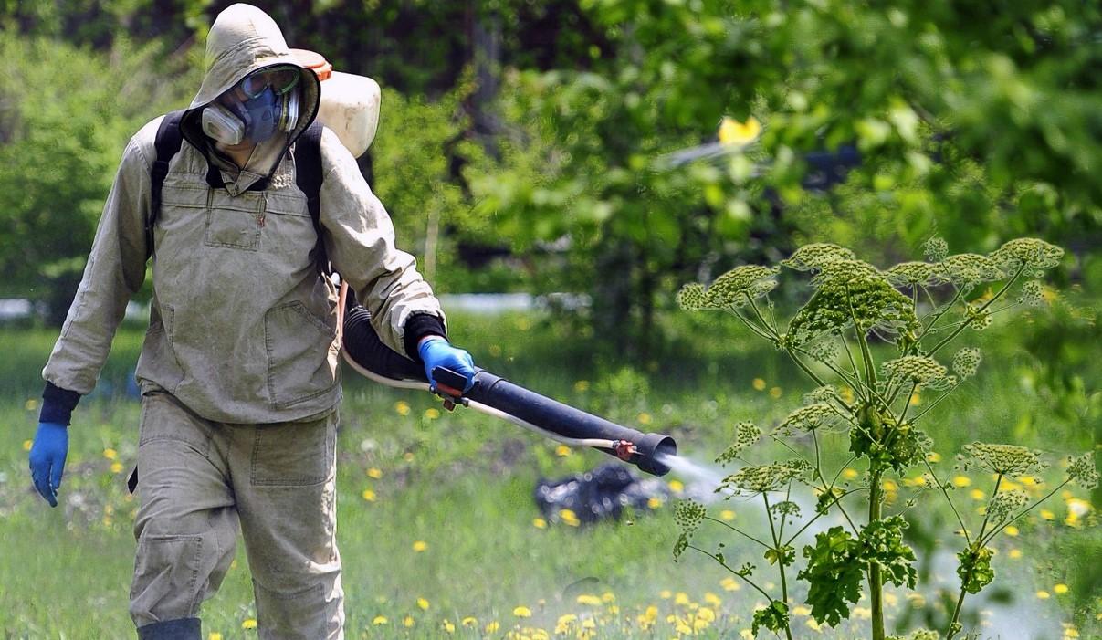 Обработка огорода гербицидом