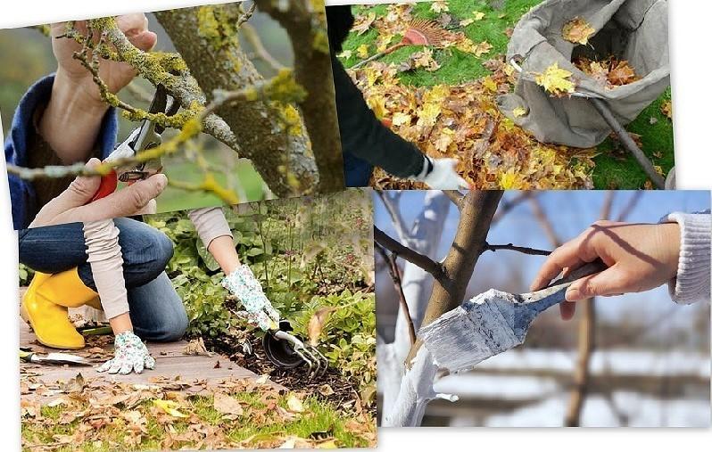 Осенний уход за садовыми растениями