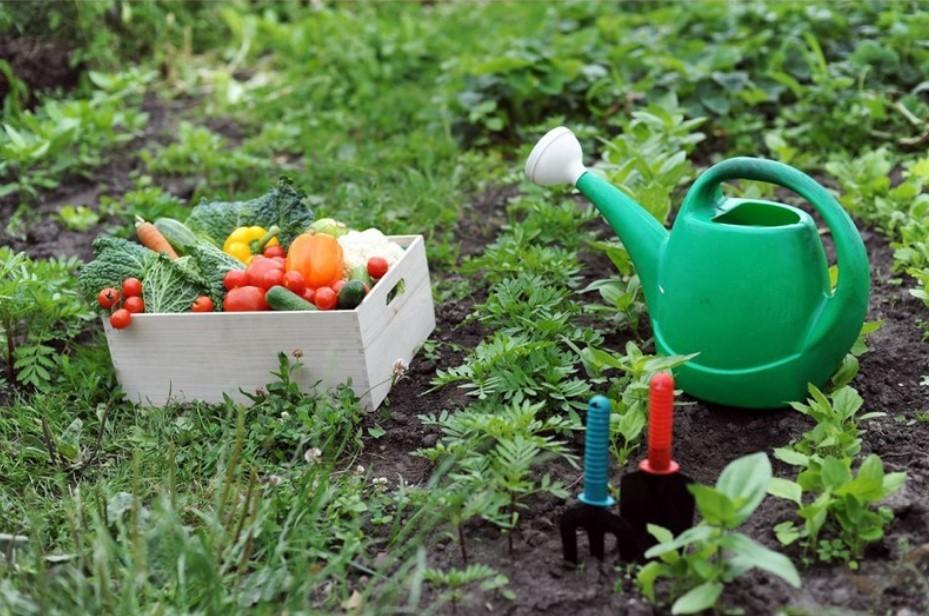 Плохие советы для сада и огорода
