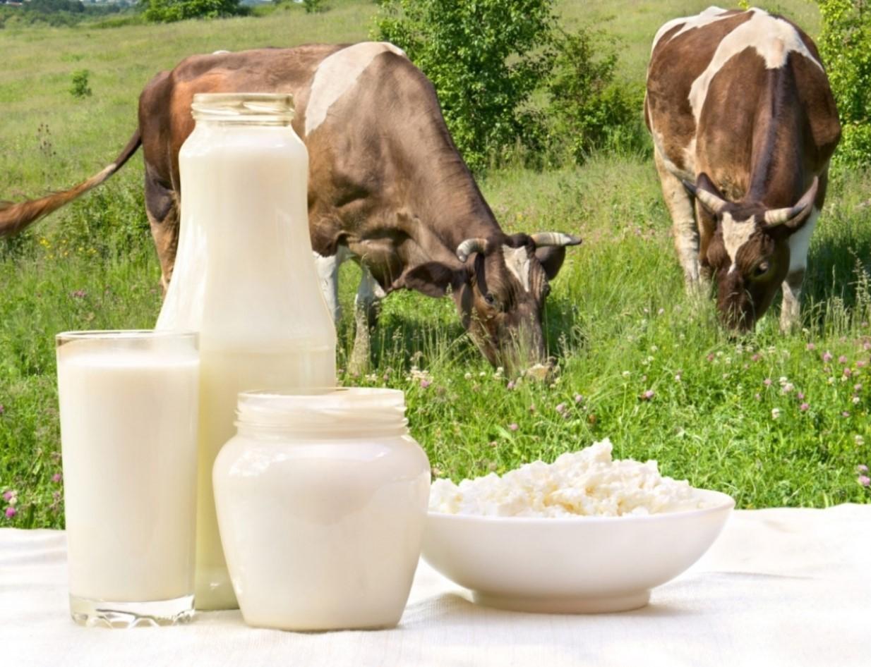 Сливки из коровьего молока