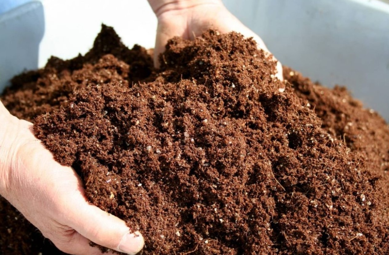 Торф с песком для примулы