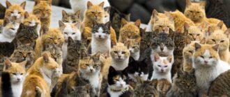 Недорогие кошки
