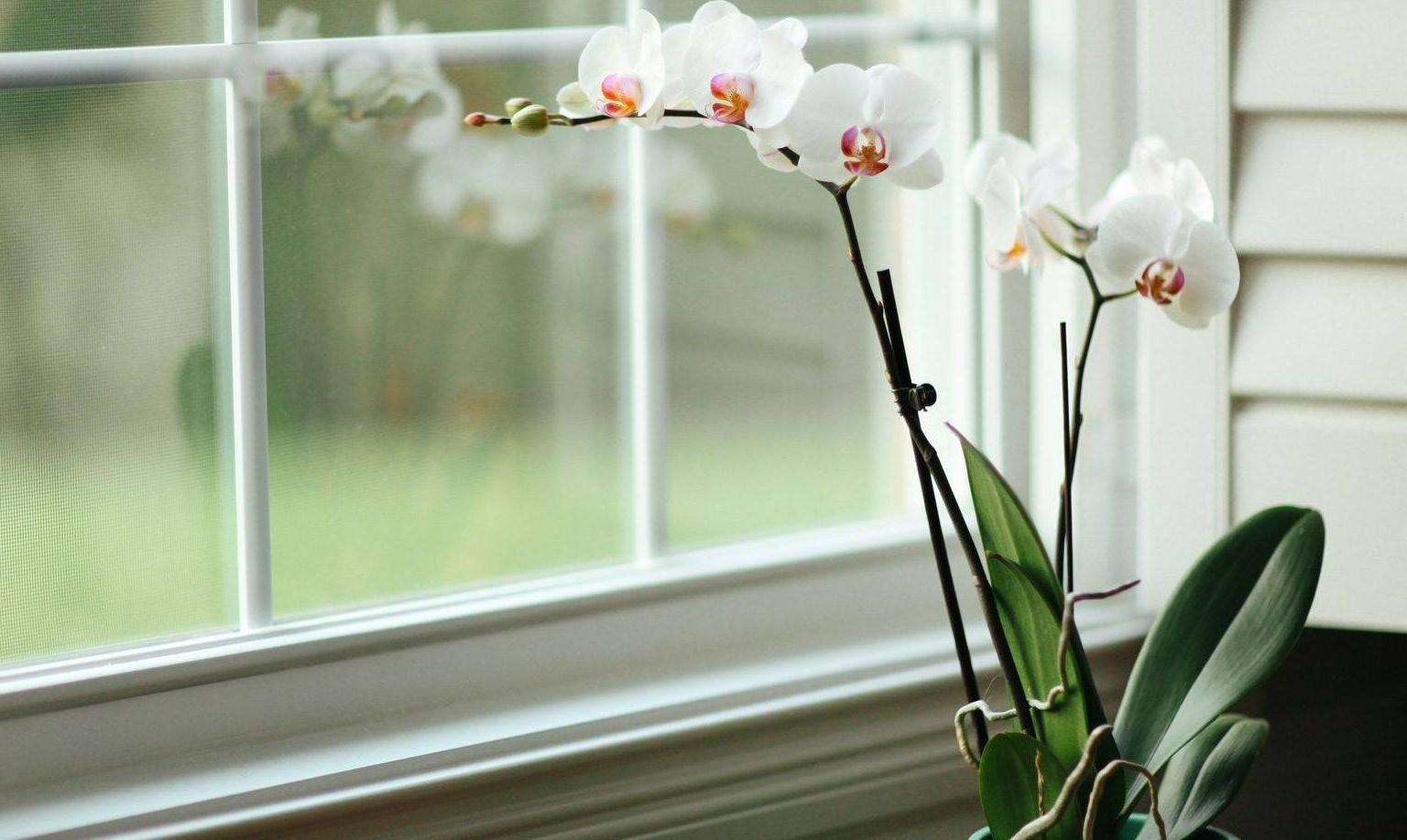 Орхидея на солнце