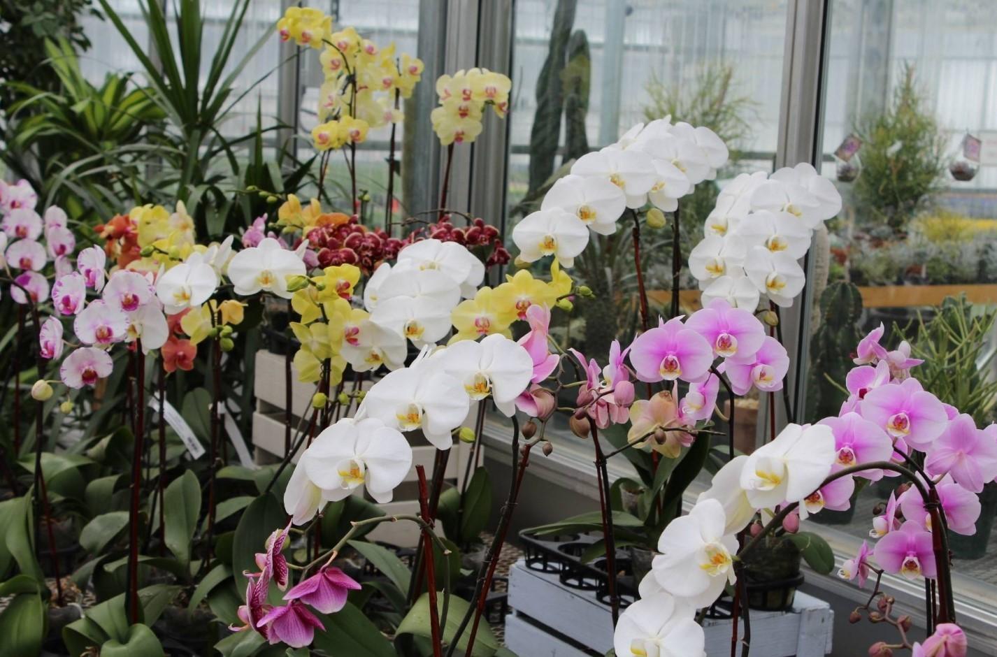 Цветения орхидеи