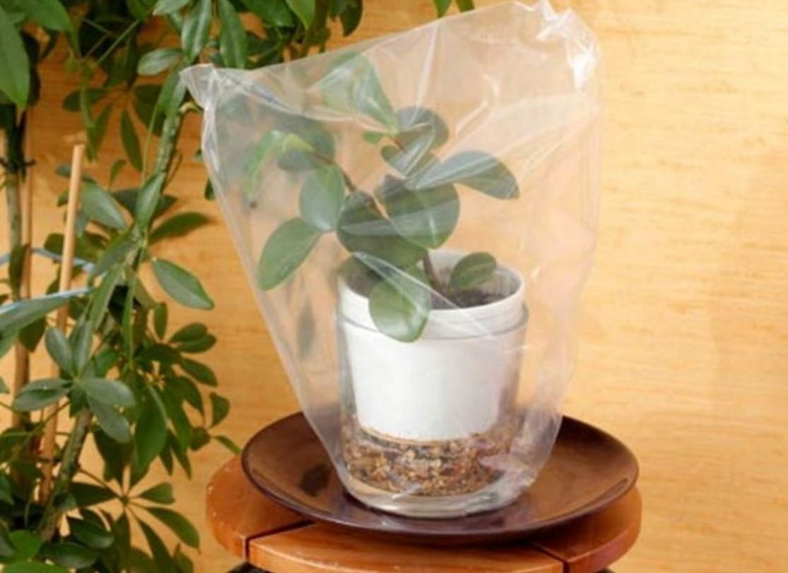 Накрытое растения