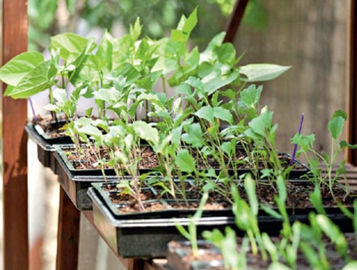 Закалка растения