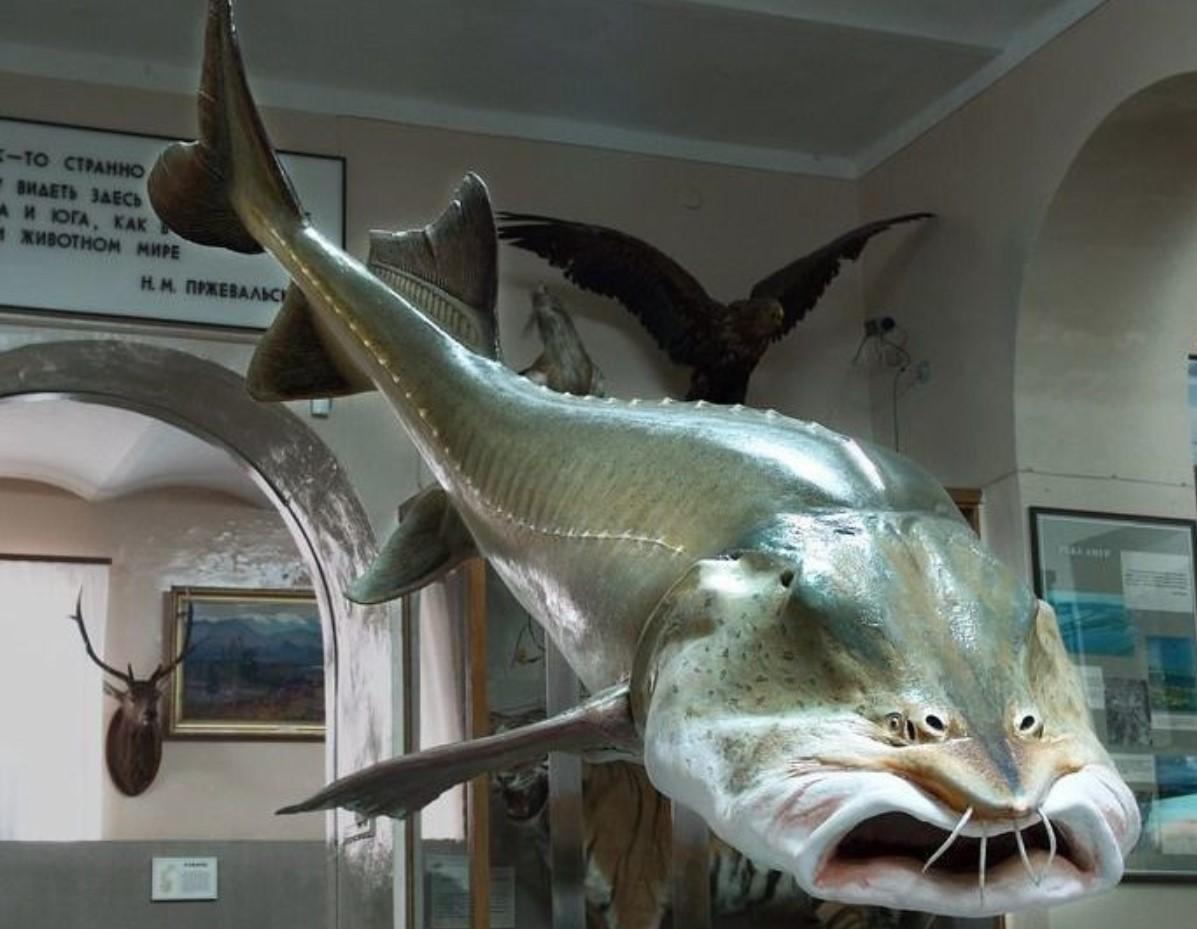 Дорогая рыба
