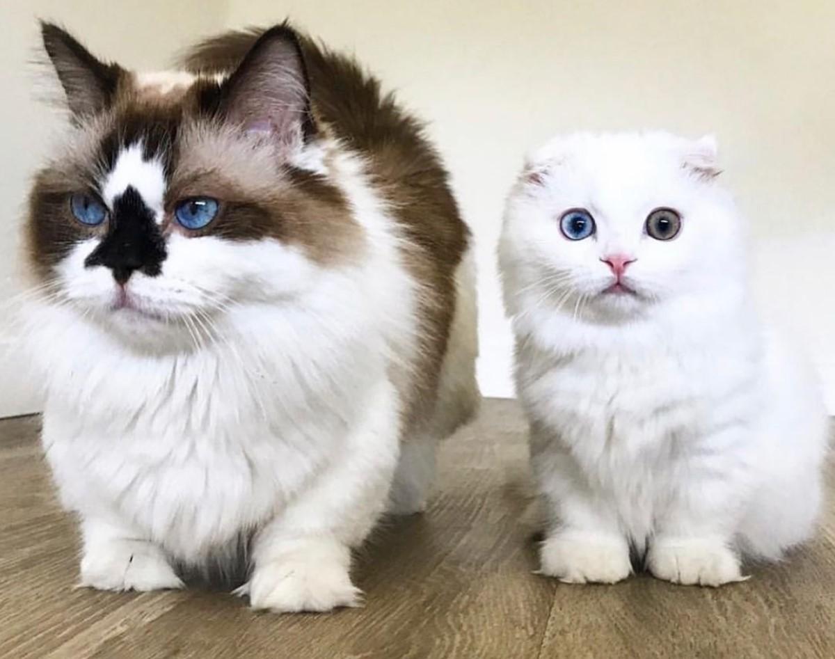 Мелкие кошки